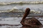 【超悲報】英石油メジャーBP、-48.8%の減配を発表